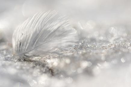 plume glacée