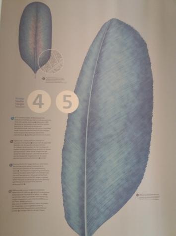 Naissance d'une plume (5)