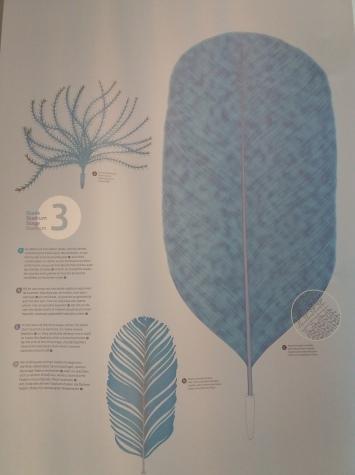 Naissance d'une plume (4)