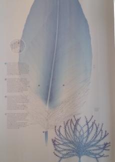 Naissance d'une plume (1)