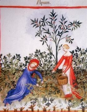 Les racines, Moyen Âge