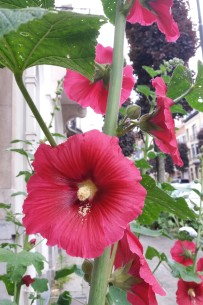 fleurs de juin (4)