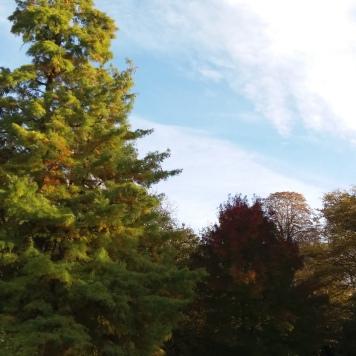 chaleur d'automne (4)