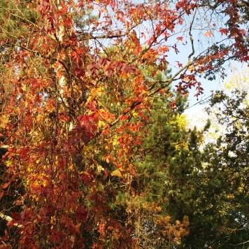 chaleur d'automne (3)