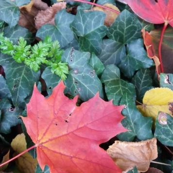 chaleur d'automne (2)