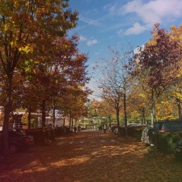 chaleur d'automne (1)