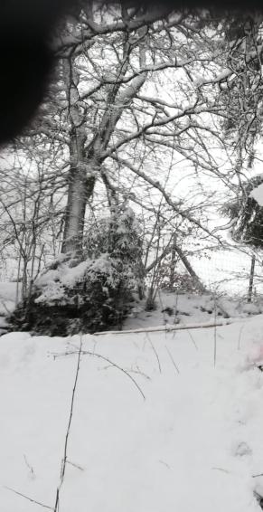 200227. neige